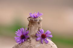 Old dusty bottle with flower. Macro detail of old dusty bottle with flower Stock Image