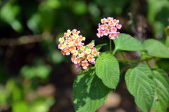 Macro detail photo of small flowering plant bush Royalty Free Stock Image