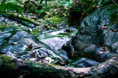 Macro detail of river going through the mountain with leaves and vegetation stock photo