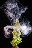 Macro detail of single cannabis bud green crack marijuana strai Stock Photography