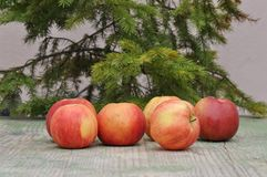 Red tasty apple Stock Photos