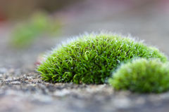 Macro detail van mos stock foto's