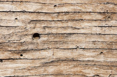 Macro detail of wooden texture Stock Image