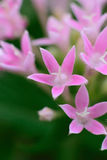 Macro details of pink summer flowers. In vertical frame Royalty Free Stock Photos
