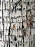 Macro dettaglio della corteccia di un albero immagini stock libere da diritti