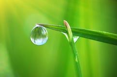 Macro of dew Stock Photos
