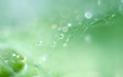 Macro dew drops on spider web. Close-up a drop of water with sparkling bokeh on green blurred background. Abstract soft artistic i Stock Image