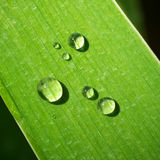 Macro of dew on green leaf Stock Photo