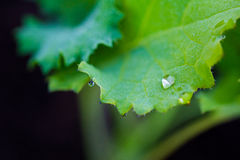 Macro Dew on Leaf in Garden Stock Images