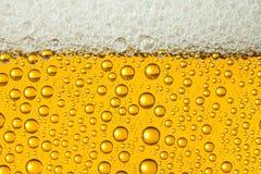 Macro di birra di rinfresco Fotografia Stock Libera da Diritti