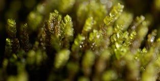 Macro di erba verde immagine stock libera da diritti