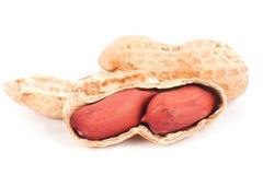Macro di un'arachide aperta isolata su bianco Fotografia Stock Libera da Diritti