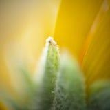 Macro di un fiore facendo uso del lense inverso di 50mm Immagine Stock