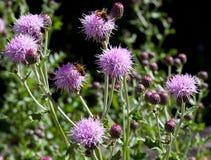 Macro di un fiore selvaggio Fotografie Stock Libere da Diritti