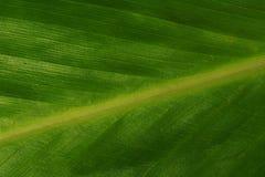 Macro di un foglio verde fotografia stock