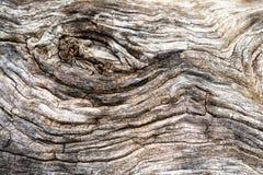 Macro di una corteccia di di olivo Fotografie Stock Libere da Diritti