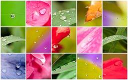Macro di Waterdrops sulle foglie e sui fiori Fotografia Stock
