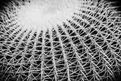 Macro dichte omhooggaand van cactusdetails Royalty-vrije Stock Afbeelding