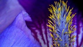 Macro dichte omhooggaand van een Purpere bloem Stock Afbeeldingen