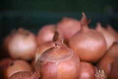 Macro dichte omhooggaand van verse uien met donkere achtergrond Royalty-vrije Stock Afbeeldingen