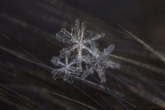 Macro die van Sneeuwvlok wordt geschoten Stock Afbeeldingen