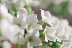 Macro die van witte bloemen bij huwelijk wordt geschoten Stock Afbeeldingen