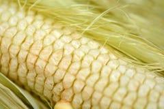 Macro do alimento amarelo do fundo do milho, o saudável e o saboroso Imagem de Stock Royalty Free