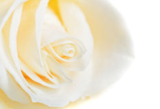Macro do botão da rosa do branco Foto de Stock