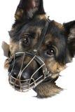 Macro do cão Imagens de Stock Royalty Free