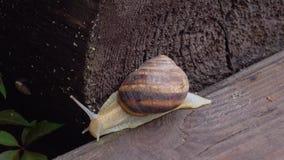 Macro do caracol bonito que rasteja na natureza Fim acima filme
