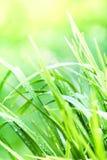 Macro do fundo da grama verde Fundos naturais abstratos com Fotos de Stock