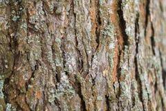 Macro do fundo da textura da casca de árvore fotos de stock