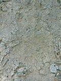 Macro do fungo na palmeira Fotografia de Stock