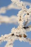 Macro do inverno Fotografia de Stock Royalty Free