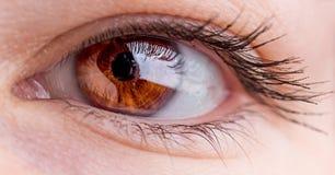 Macro do olho côr de avelã bonito Foto de Stock