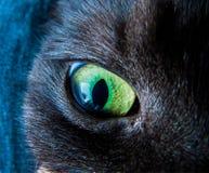 Macro do olho de gato fotografia de stock royalty free