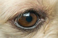 Macro do olho do cão fotos de stock royalty free