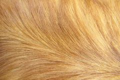 Macro Dog Hair 1 Royalty Free Stock Photos