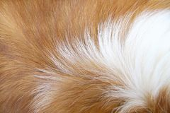 Macro Dog Hair Royalty Free Stock Photos