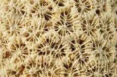 Macro: Doorstane koraalrots royalty-vrije stock fotografie