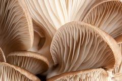 Macro dos cogumelos Imagem de Stock