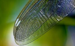 Macro of dragonfly wing Royalty Free Stock Image