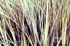Macro of dried grass, vintage look Stock Images