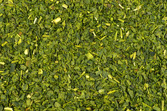 Macro of dried green tea background texture Stock Photo