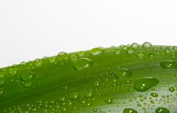 Macro drops. Green leaf with drops Royalty Free Stock Photos