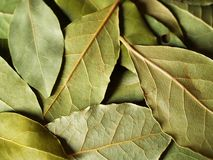 Macro dry bay leaves. Macro bay leaves spice for cooking Stock Image