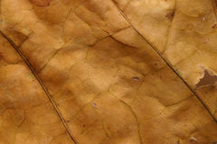 Macro Dry Dead Leaf Texture Stock Photography