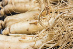 Macro of Dry Ginseng Roots. Stock Photography