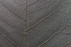 Macro of Dry Leaf Royalty Free Stock Photography