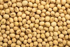 Macro of dry organic soya beans Royalty Free Stock Photography
